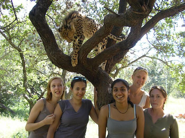 csm_Volunteer_Project_Cheetah_Conservation_2_a43fe24185.jpg